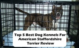 Top 5 Best Dog Kennels For American Staffordshire Terrier in 2020 Review