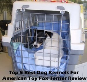 Top 5 Best Dog Kennels For American Toy Fox Terrier in 2020 Review
