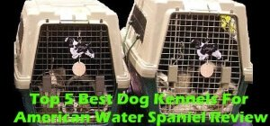 Top 5 Best Dog Kennels For American Water Spaniel in 2020 Review