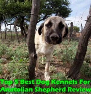 Top 5 Best Dog Kennels and Cages For Anatolian Shepherd in 2020 Review