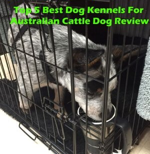 Top 5 Best Dog Kennels For Australian Cattle Dog in 2018 Review