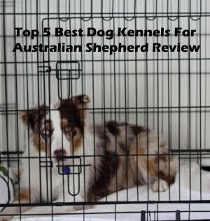 Top 5 Best Dog Kennels and Cages For Australian Shepherd in 2018 Review