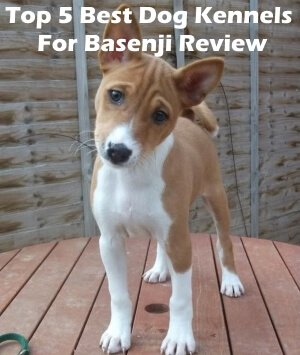 Top 5 Best Dog Kennels For Basenji in 2020 Review