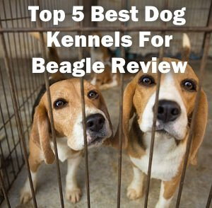 Top 5 Best Dog Kennels For Beagle in 2020 Review