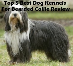 Top 5 Best Dog Kennels and Cages For Bearded Collie in 2018 Review