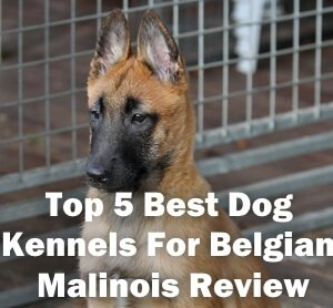 Top 5 Best Dog Kennels For Belgian Malinois Review