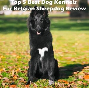 Top 5 Best Dog Kennels and Cages For Belgian Sheepdog in 2020 Review