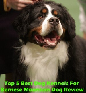 Top 5 Best Dog Kennels and Cages For Bernese Mountain in 2020 Review