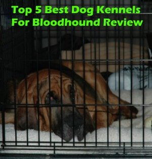 Top 5 Best Dog Kennels and Cages For Bloodhound in 2020 Review