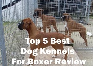 Top 5 Best Dog Kennels For Boxer Review