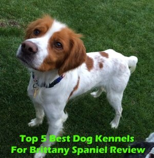 Top 5 Best Dog Kennels For Brittany Spaniel in 2019 Review