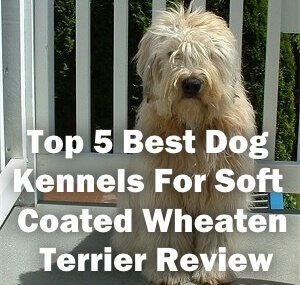 Top 5 Best Dog Kennels For Soft Coated Wheaten Terrier in 2018 Review