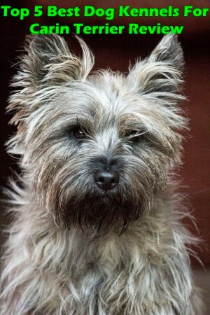 Top 5 Best Dog Kennels For Cairn Terrier in 2018 Review