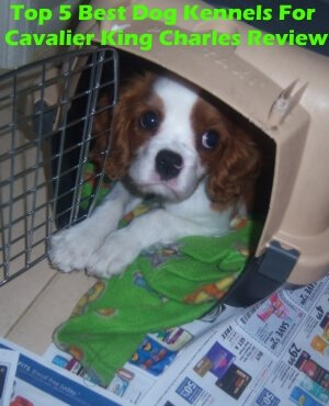 Top 5 Best Dog Kennels For Cavalier King Charles Spaniel in 2019 Review