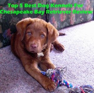 Top 5 Best Dog Kennels and Cages For Chesapeake Bay Retriever in 2020 Review