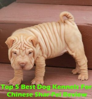Top 5 Best Dog Kennels For Chinese Shar-Pei in 2019 Review