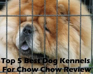 Top 5 Best Dog Kennels and Cages For Chow Chow in 2020 Review