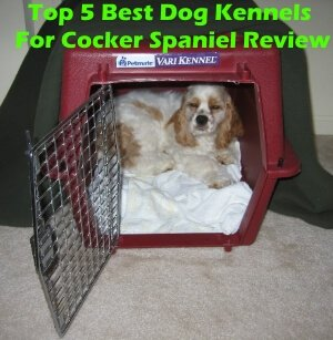 Top 5 Best Dog Kennels For Cocker Spaniel in 2020 Review