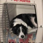 Top 5 Best Dog Kennels and Cages For Collie in 2016 Review