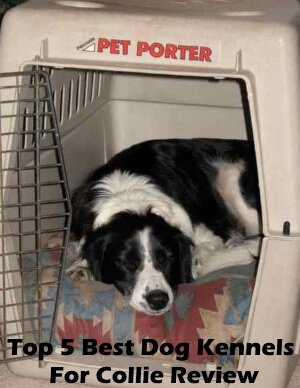 Top 5 Best Dog Kennels and Cages For Collie in 2018 Review