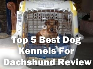 Top 5 Best Dog Kennels For Dachshund in 2020 Review
