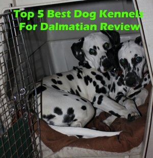 Top 5 Best Dog Kennels and Cages For Dalmatian in 2018 Review