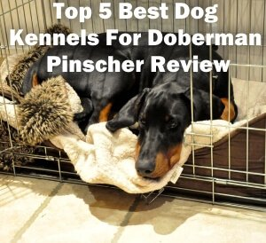 Top 5 Best Dog Kennels and Cages For Doberman Pinscher in 2020 Review