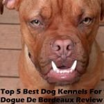 Top 5 Best Dog Kennels and Cages For Dogue De Bordeaux in 2016 Review