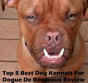 Top 5 Best Dog Kennels and Cages For Dogue De Bordeaux in 2020 Review