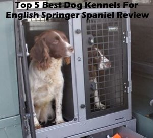 Top 5 Best Dog Kennels For English Springer Spaniel in 2019 Review