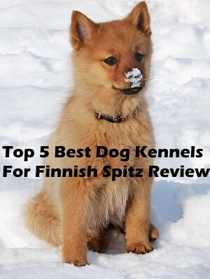 Top 5 Best Dog Kennels For Finnish Spitz in 2018 Review