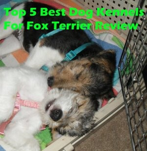 Top 5 Best Dog Kennels For Fox Terrier in 2020 Review
