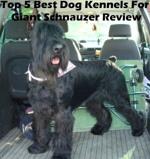 Top 5 Best Dog Kennels and Cages For Giant Schnauzer in 2020 Review