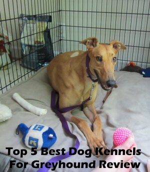 Top 5 Best Dog Kennels and Cages For Greyhound in 2020 Review