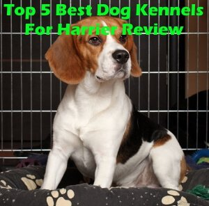 Top 5 Best Dog Kennels For Harrier in 2020 Review