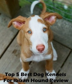 Top 5 Best Dog Kennels and Cages For Ibizan Hound in 2018 Review