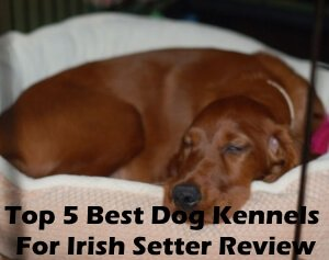 Top 5 Best Dog Kennels and Cages For Irish Setter in 2019 Review