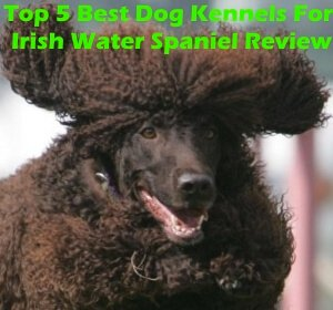 Top 5 Best Dog Kennels and Cages For Irish Water Spaniel in 2018 Review