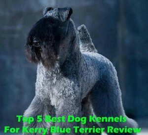 Top 5 Best Dog Kennels For Harrier in 2018 Review