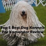 Top 5 Best Dog Kennels and Cages For Komondor in 2016 Review