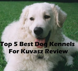 Top 5 Best Dog Kennels and Cages For Kuvasz in 2020 Review