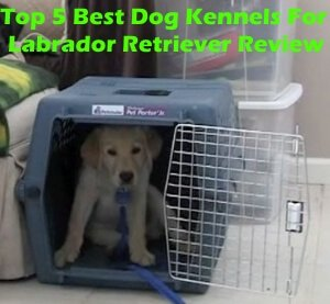 Top 5 Best Dog Kennels and Cages For Labrador Retriever in 2019 Review
