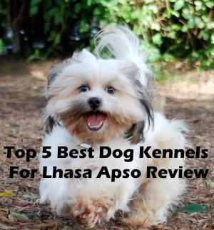 Top 5 Best Dog Kennels For Lhasa Apso in 2019 Review