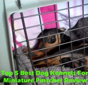 Top 5 Best Dog Kennels For Miniature Pinscher in 2018 Review