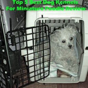 Top 5 Best Dog Kennels For Miniature Poodle in 2020 Review
