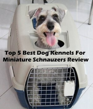 Top 5 Best Dog Kennels For Miniature Schnauzers in 2018 Review