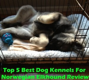 Top 5 Best Dog Kennels For Norwegian Elkhound in 2018 Review