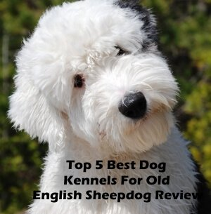 Top 5 Best Dog Kennels and Cages For Old English Sheepdog in 2018 Review