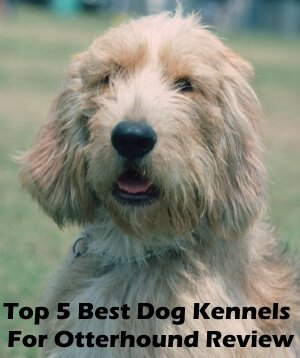 Top 5 Best Dog Kennels and Cages For Otterhound in 2018 Review