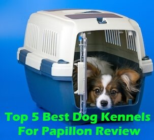 Top 5 Best Dog Kennels For Papillon in 2020 Review